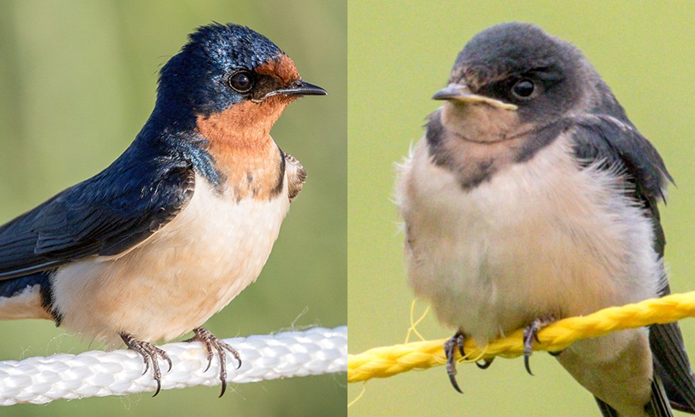 Birds Combined