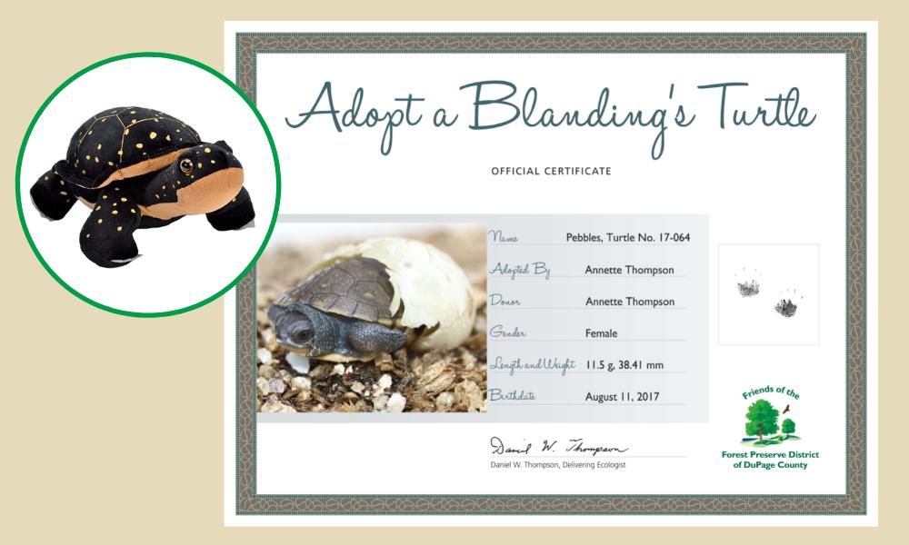 Blandings-turtle-adoption-certificate-Pebbles-Thompson