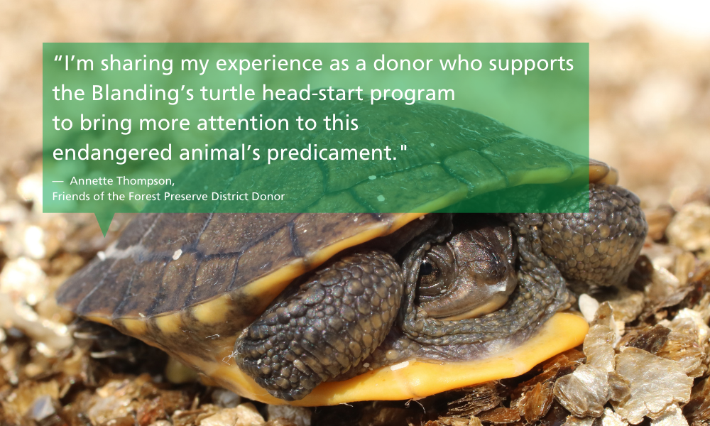 Donor-Annette-Thompson-quote-Blanding-turtle-endangered-species