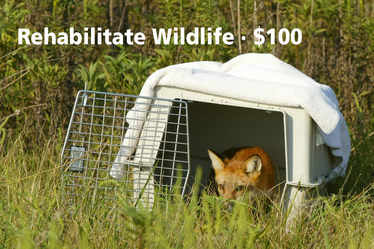 donate-rehabilitate-wildlife-2