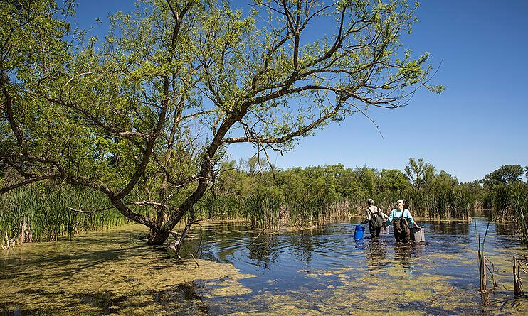 ecologists-in-wetland-searching-turtle-traps