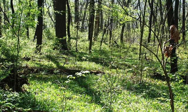 friends-project-belleau-woods.jpg