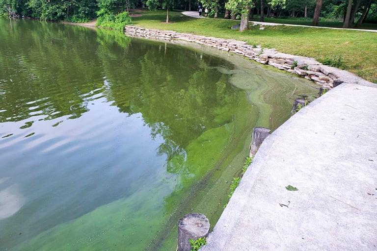 2020-06-29-Herrick-Lake-3