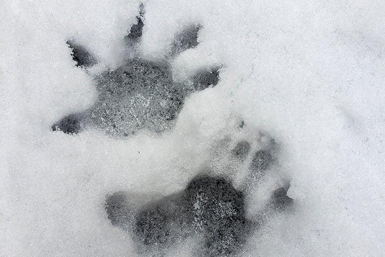 animal-tracks-768x512