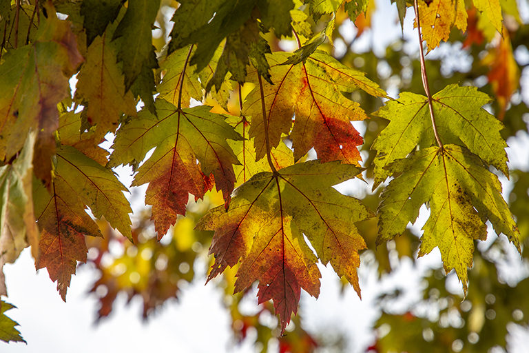 fall-leaves-home-feature
