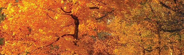 herrick-lake-fall-tree