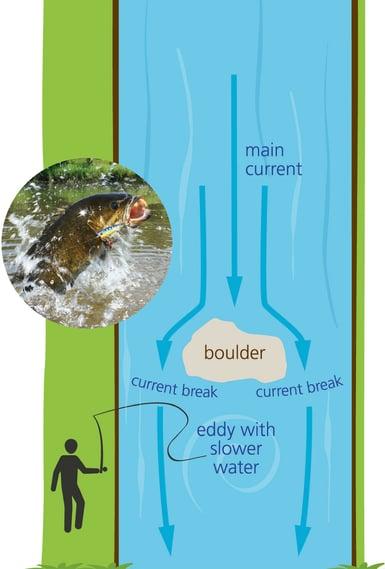 fishing-fish-graphic