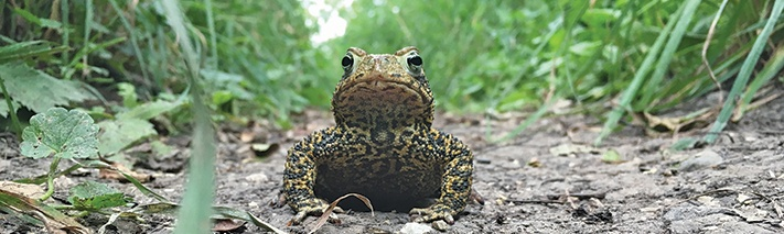toad-on-trail