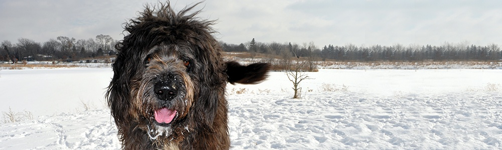 dog in snow-covered off-leash dog area