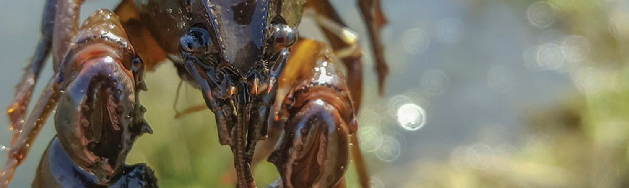 devil-crayfish-waterfall-glen