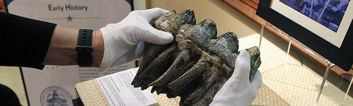 mastodon-tooth-news-notes