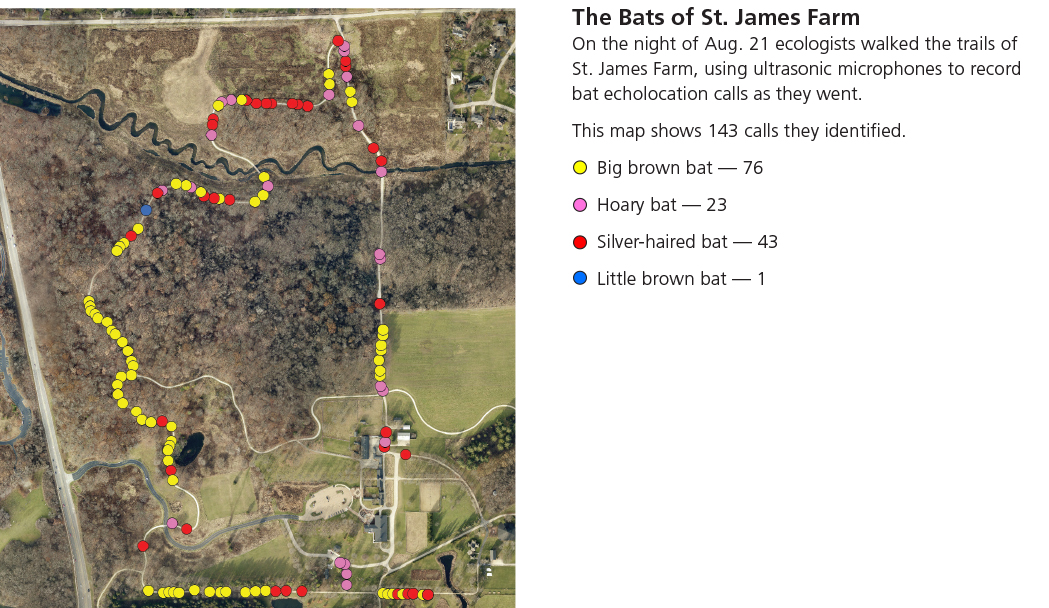 bats-st-james-farm