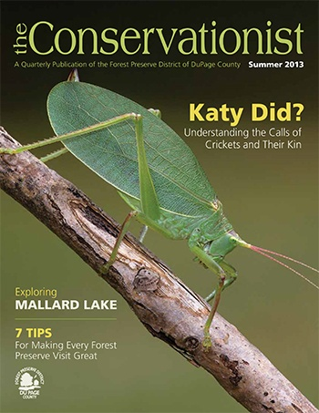 katydid on cover of summer 2013 Conservationist