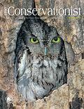 screech owl on cover of winter 2013 Conservationist