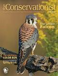 American kestrel on cover of fall 2014 Conservationist