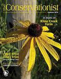 black-eyed Susan on cover of summer 2014 Conservationist