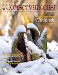 skunk cabbage on cover of winter 2014 Conservationist