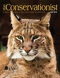bobcat on cover of fall 2015 Conservationist