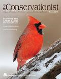 northern cardinal on cover of winter 2016 Conservationist