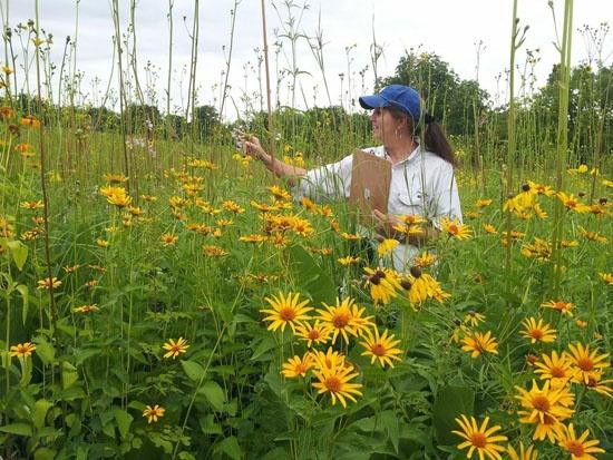 cindy-crosby-planting-for-pollinators-speaker