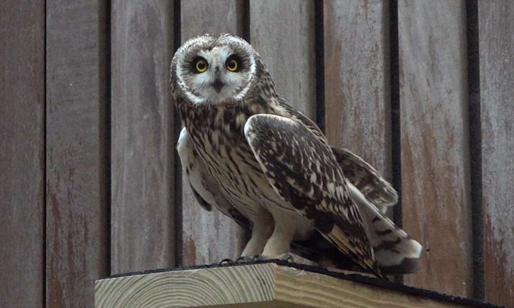 Owl-in-flight-cage