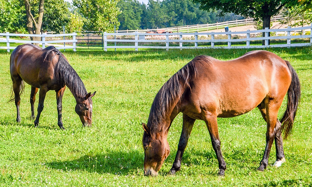 horses-grazing-danada-equestrian-center