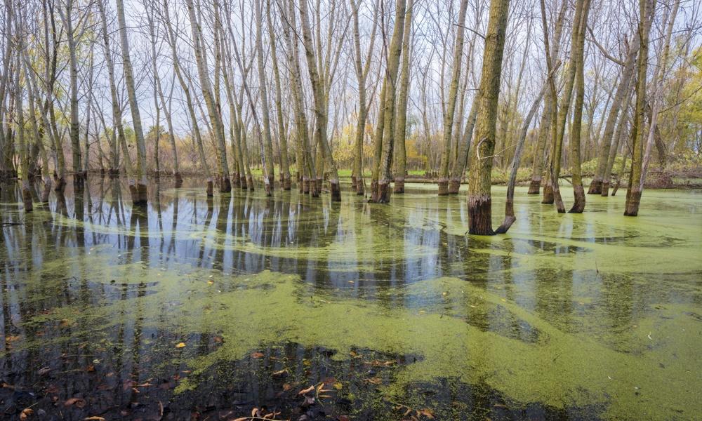 big-woods-ephemeral-pond-MarkBaldwin