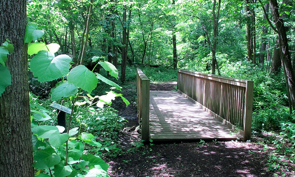 Goodrich-Woods-footbridge-1000x600