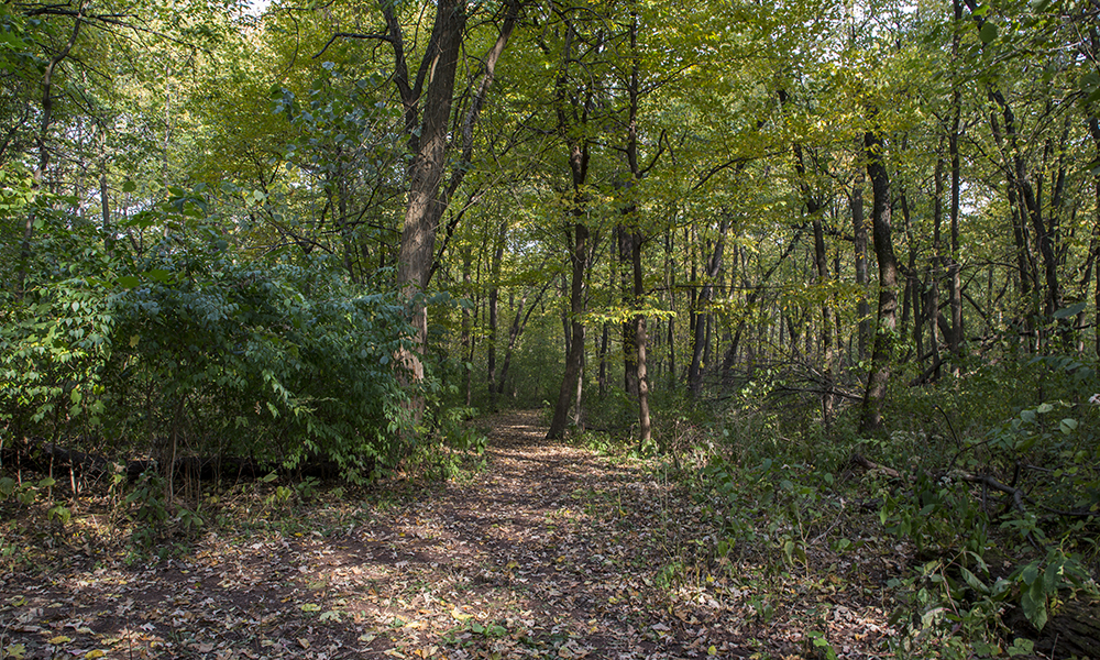 Goodrich-Woods-trail-1000x600
