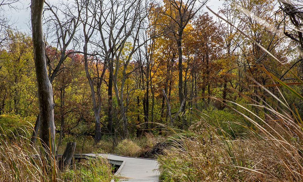 lyman-woods-boardwalk