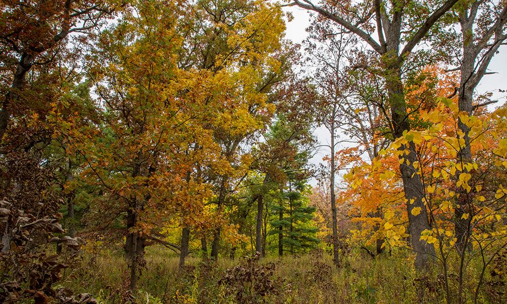 lyman-woods-fall-1000x600