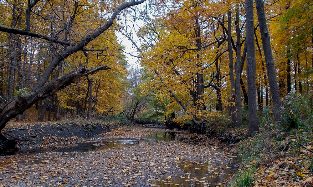 Maple-Grove-fall-colors-creek-1000x600