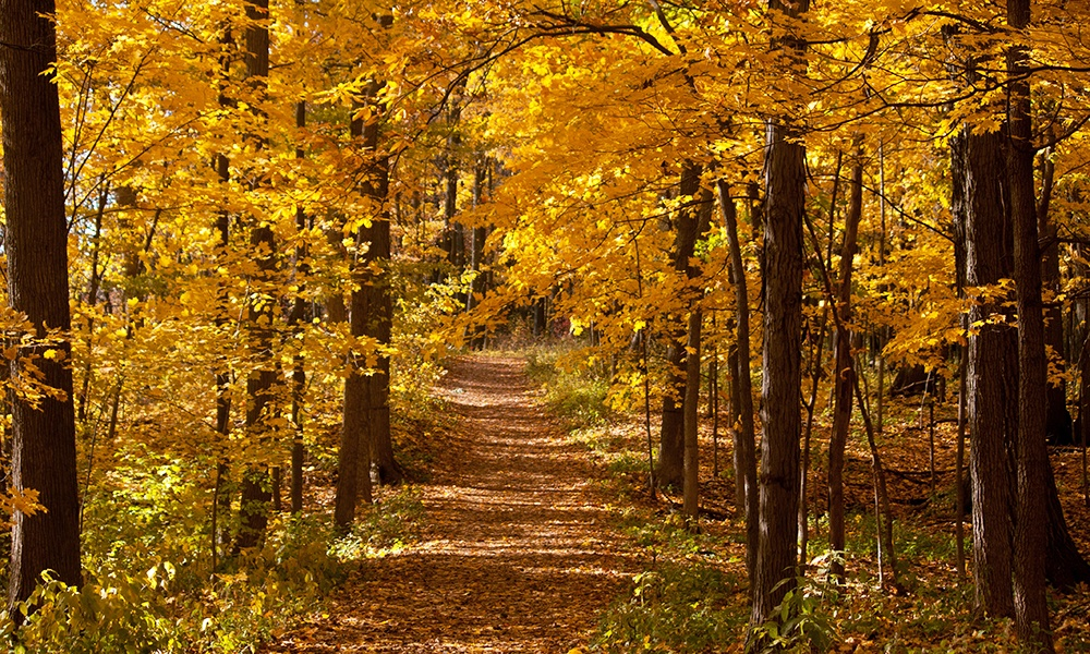 woodland-trail-fall-colors-meacham-grove