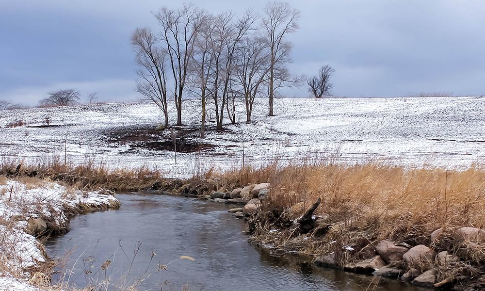 trees-prairie-winter-springbrook-prairie