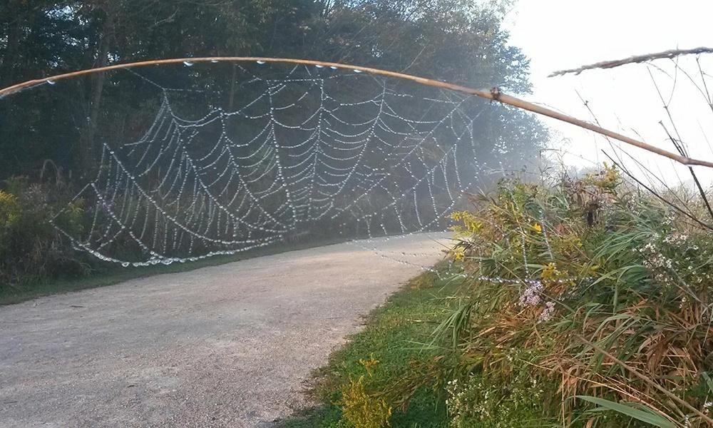 Timber-Ridge-spiderweb-1000x600