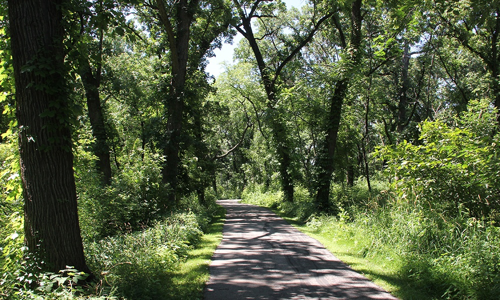york-woods-trail