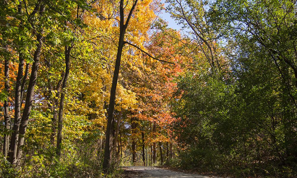 FBW-fall-colors