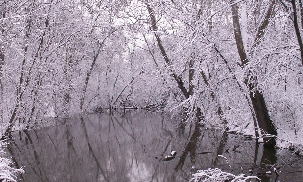 FBW-winter-1000x600