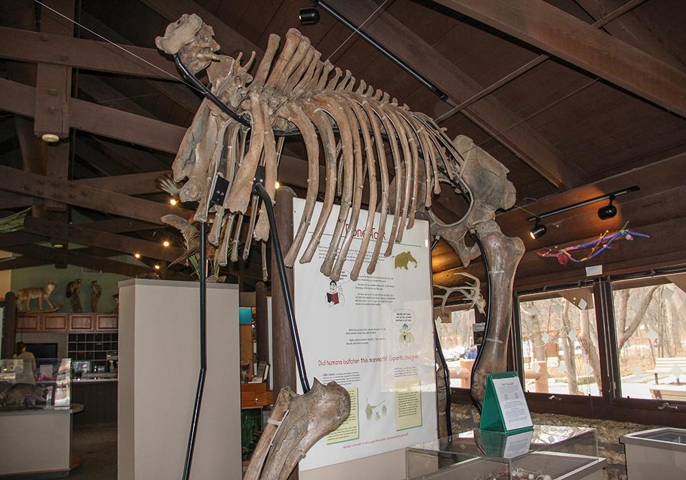 woolly-mammoth