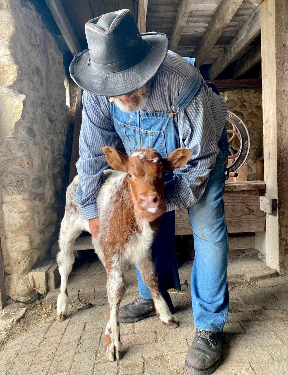 bull-calf-with-volunteer-1000x1300
