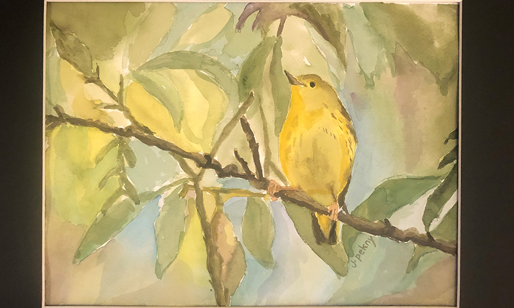 10-Yellow-Warbler-Jessica-Pekny