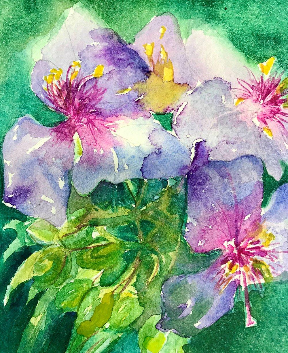 14-Purple-Spiderwort-Ann-Grill