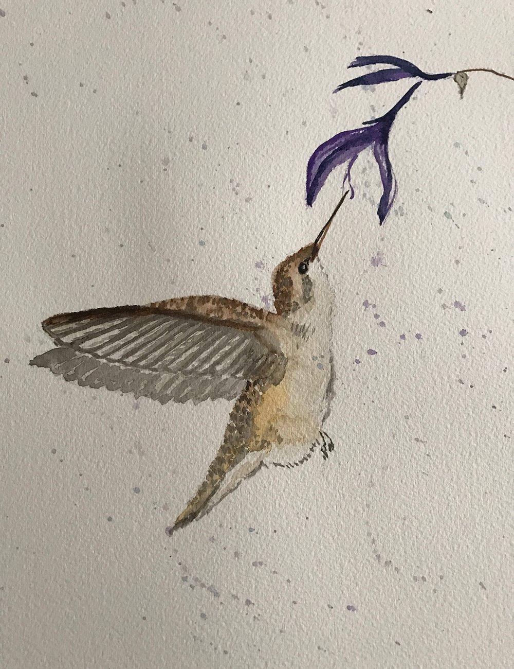 2-Ruby-Throated-Hummingbird-jackie-clare-louis