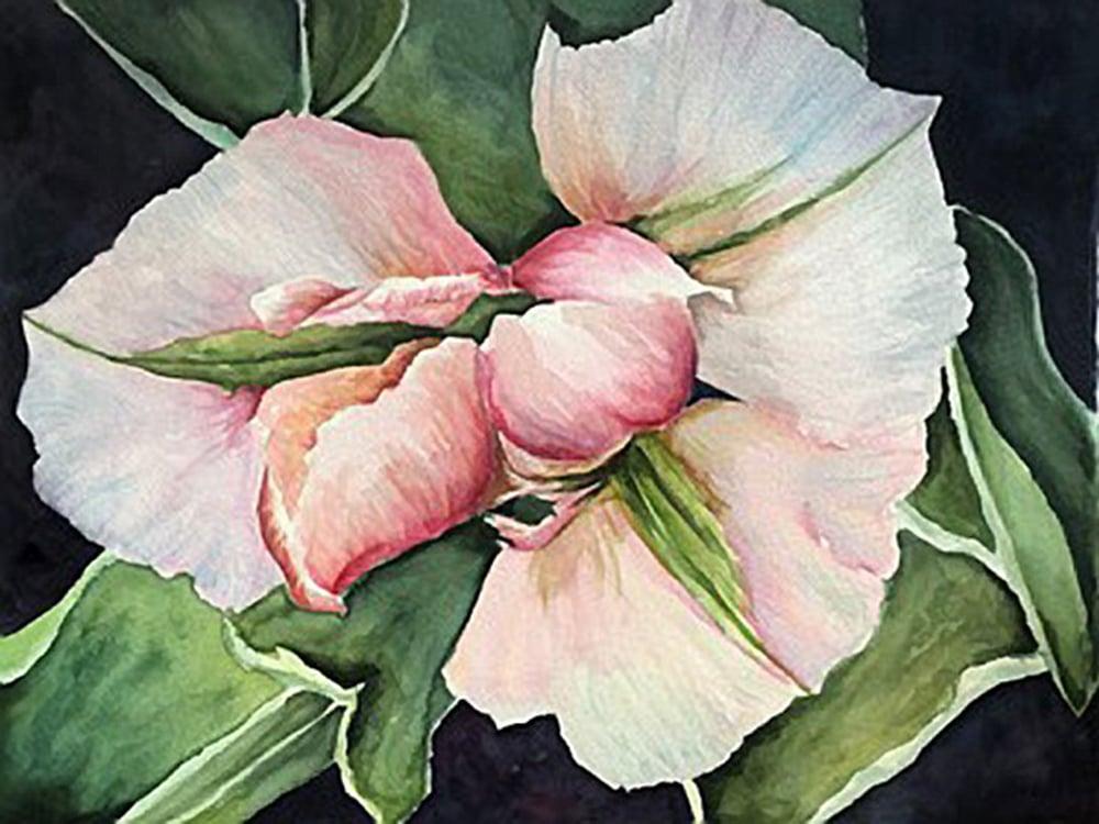 3-Spring-Beauty-Mary-Ellen-McDermott