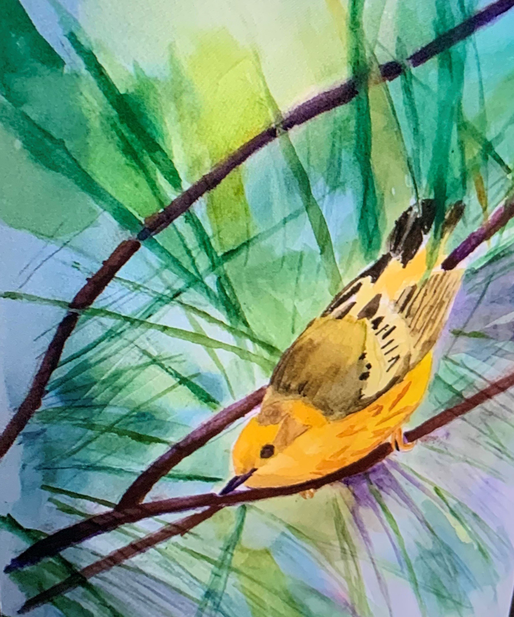 8-Yellow-Warbler-Ready-to-Go-Deming-Payne