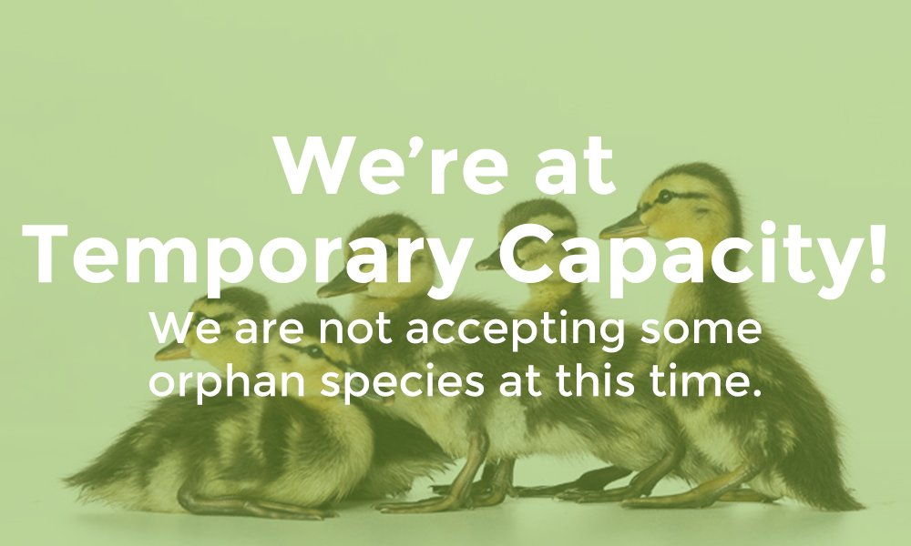 temporary-capacity-some-orphan-species