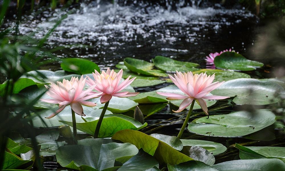 Willowbrook-flowers-1000x600