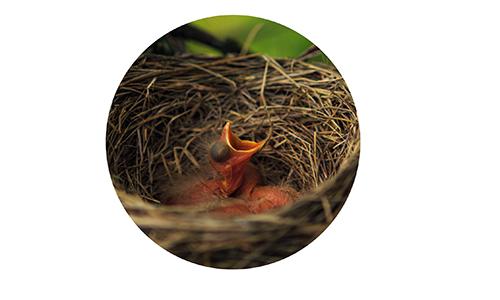 baby-bird-circle-edited