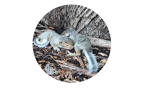 baby-squirrel-circle-edited