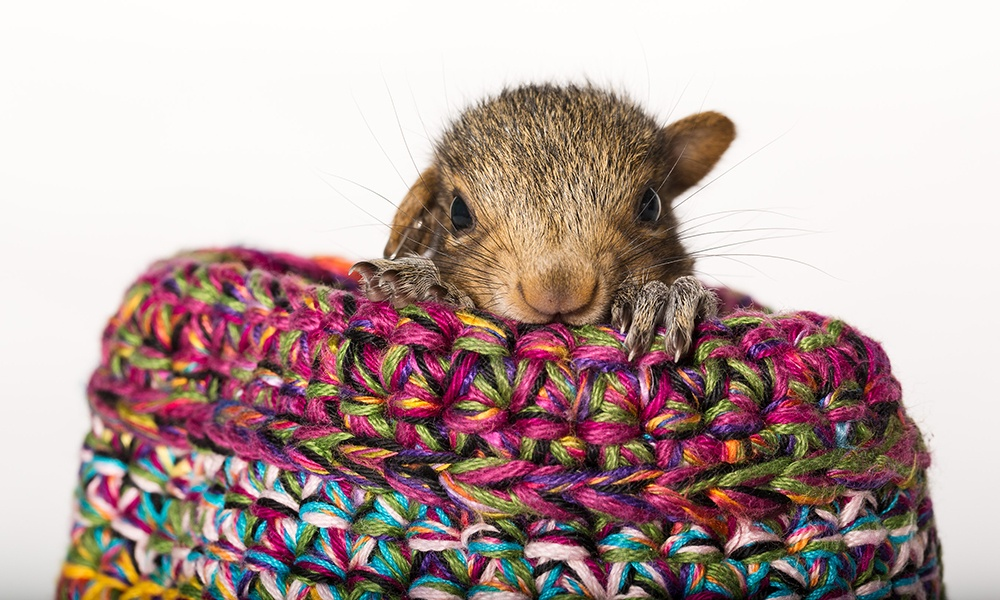 baby-squirrel-knitted-nest-MikeShimer